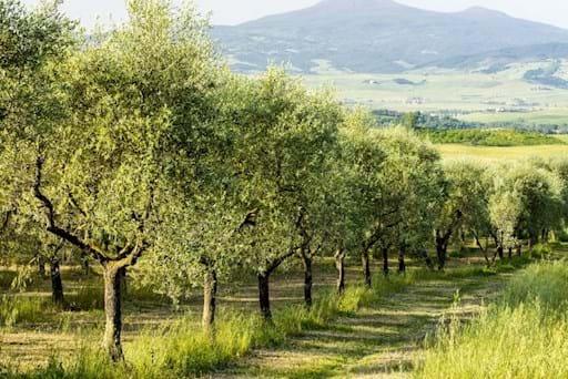 Olive Graves Frascati