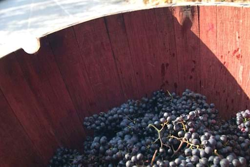 Grape's Basket Wine Making